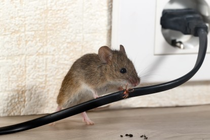Pest Control in Buckhurst Hill, IG9. Call Now! 020 8166 9746