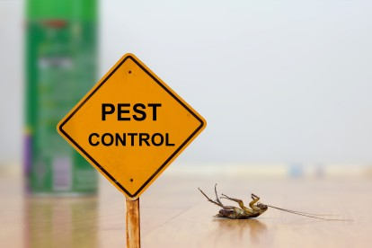 Pest Contol in Buckhurst Hill, IG9. Call Now 020 8166 9746